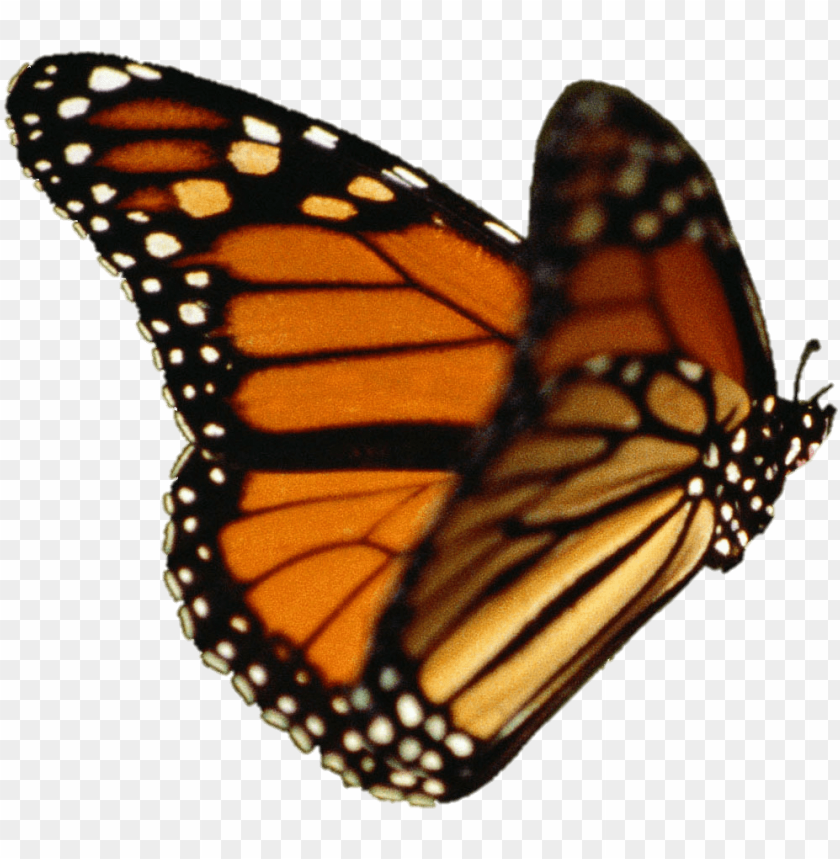 free PNG butterfly vector - monarch butterfly transparent background PNG image with transparent background PNG images transparent