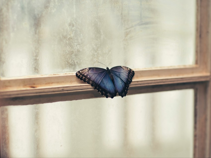 free PNG butterfly, window, wings, patterns, frame background PNG images transparent