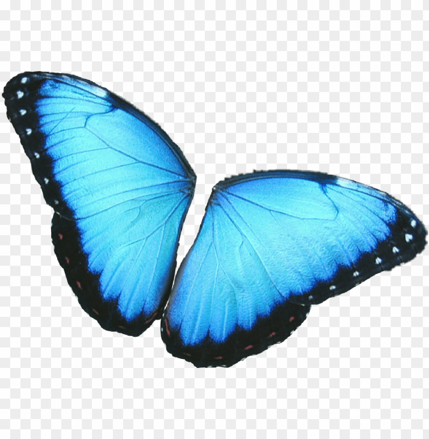 free PNG #butterfly #wings #colorful #girly #amazing #artistic - blue morpho butterfly PNG image with transparent background PNG images transparent