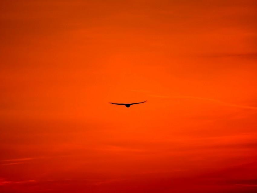 free PNG buzzard, bird, sky, flight, orange, bright, wings, hawk, predator background PNG images transparent