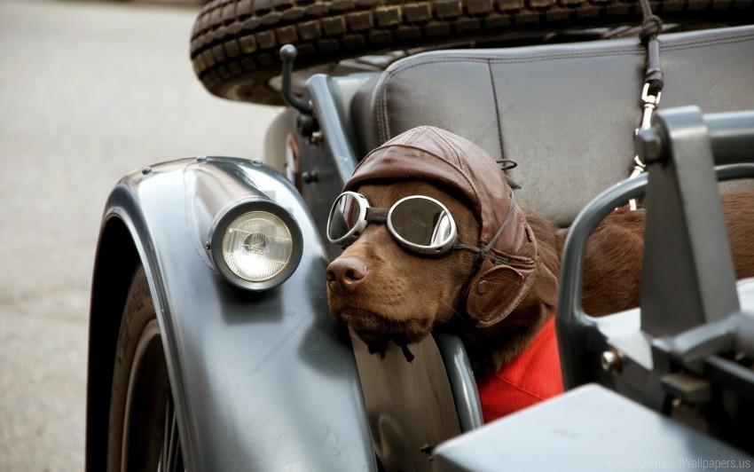 free PNG car, dog, hat, sunglasses wallpaper background best stock photos PNG images transparent