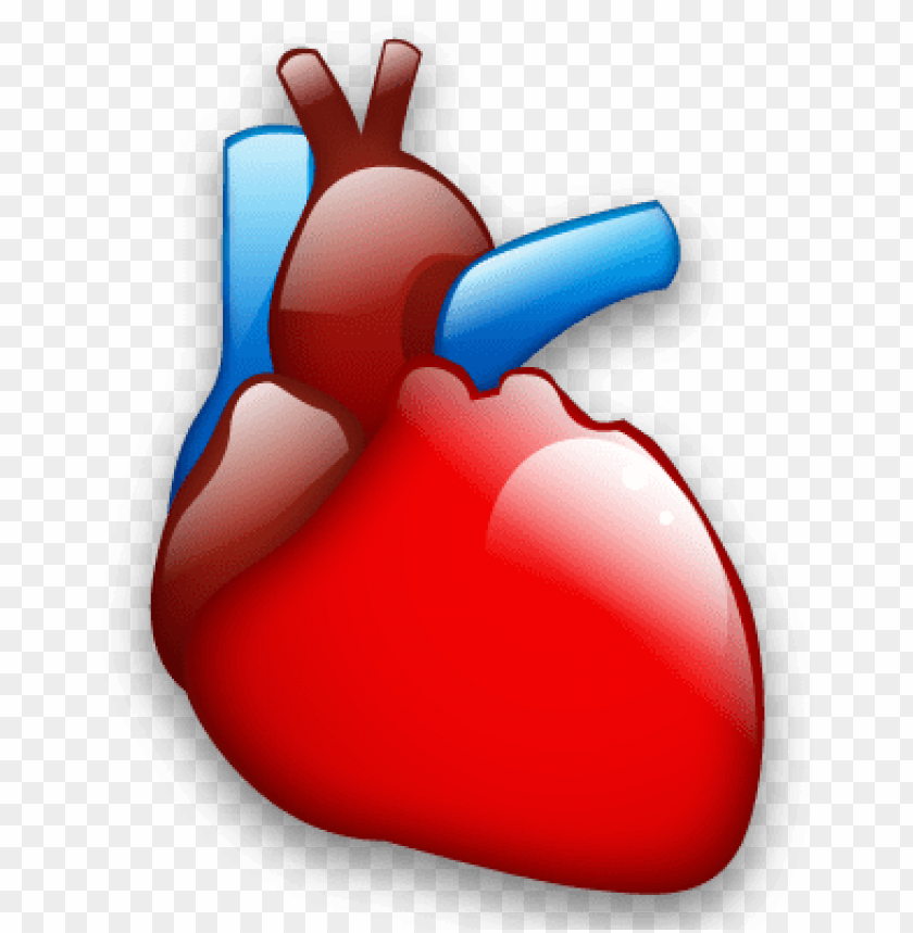 free PNG cardiology, heart, organ icon - cardiology icon png - Free PNG Images PNG images transparent