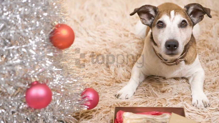 free PNG carpet, dog, new year wallpaper background best stock photos PNG images transparent