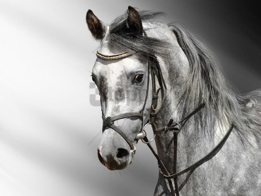 Cart Color Head Horse Wallpaper Background Best Stock Photos