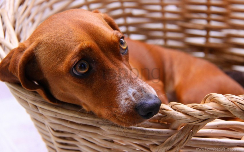 free PNG cart, dog, fear, fee, waiting wallpaper background best stock photos PNG images transparent