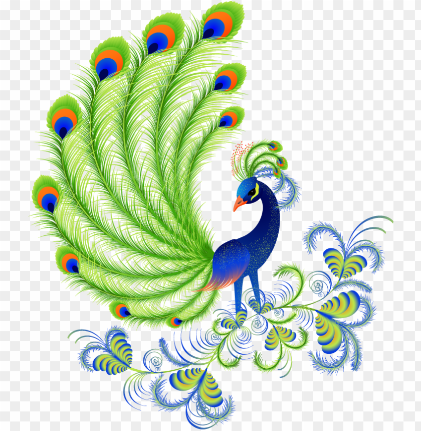 cartoon peacock feathers peacock beautiful pictures of cartoo png image with transparent background toppng cartoon peacock feathers peacock