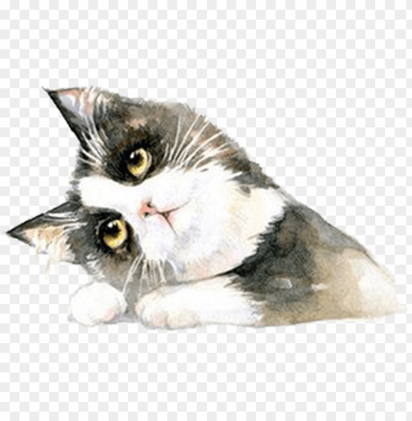 free PNG cat PNG image with transparent background PNG images transparent
