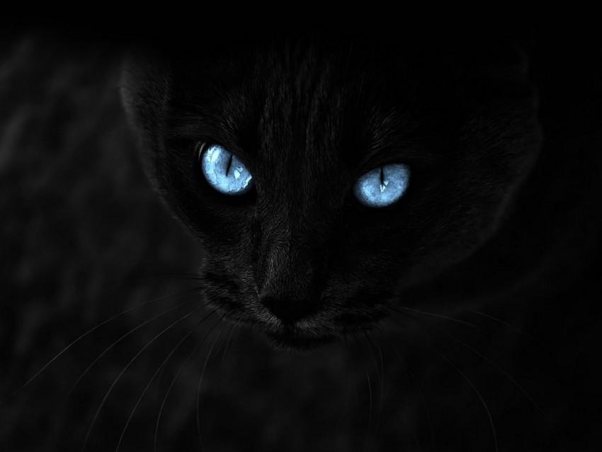 free PNG cat, black, blue-eyed, glance background PNG images transparent