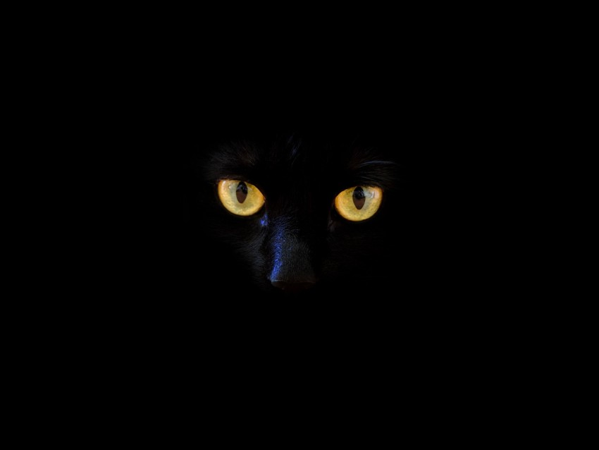 free PNG cat, black cat, eyes, dark background PNG images transparent
