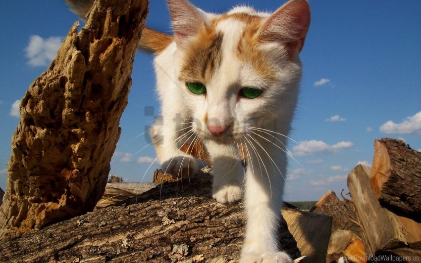 free PNG cat, climbing, spotted wallpaper background best stock photos PNG images transparent