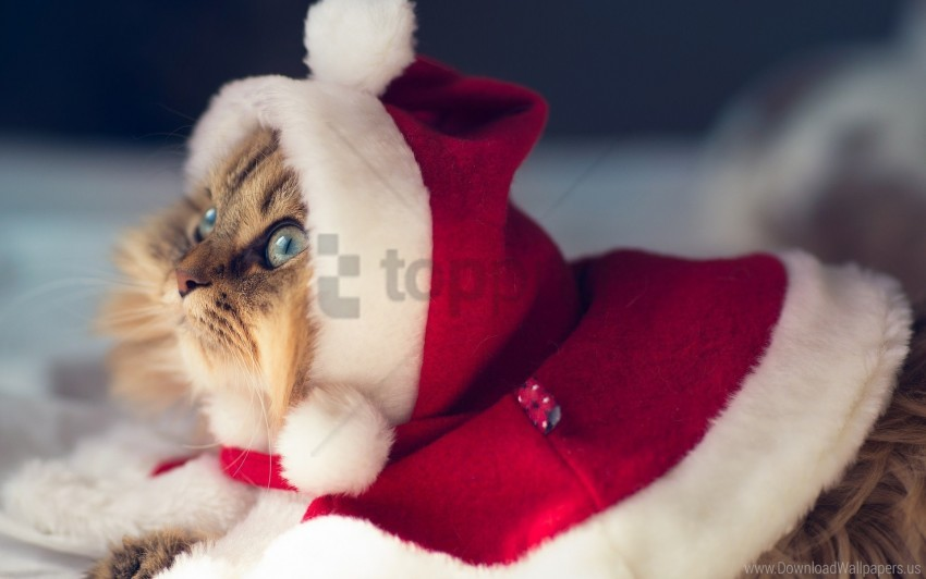 free PNG cat, costume, new year, outfit wallpaper background best stock photos PNG images transparent