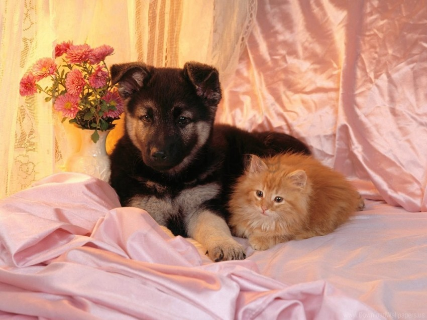 free PNG cat, couple, dog, friends wallpaper background best stock photos PNG images transparent