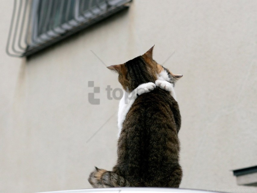 free PNG cat, couple, embrace, roof wallpaper background best stock photos PNG images transparent