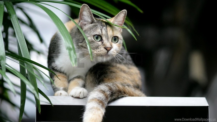 free PNG cat, curiosity, plant, tabby wallpaper background best stock photos PNG images transparent