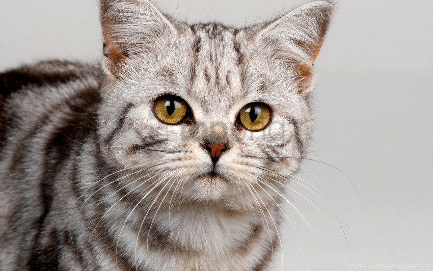 free PNG cat, cute, eyes, face, kitten, striped wallpaper background best stock photos PNG images transparent