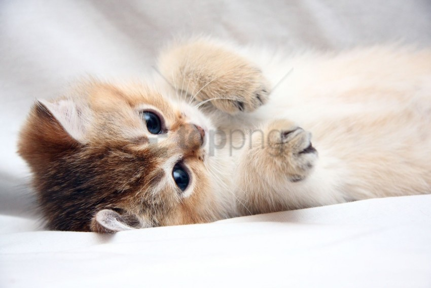 free PNG cat, cute, face, foot, kitten wallpaper background best stock photos PNG images transparent