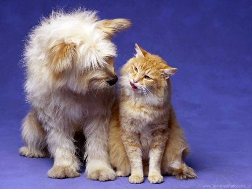 free PNG cat, dog, fluffy, friends, playful wallpaper background best stock photos PNG images transparent