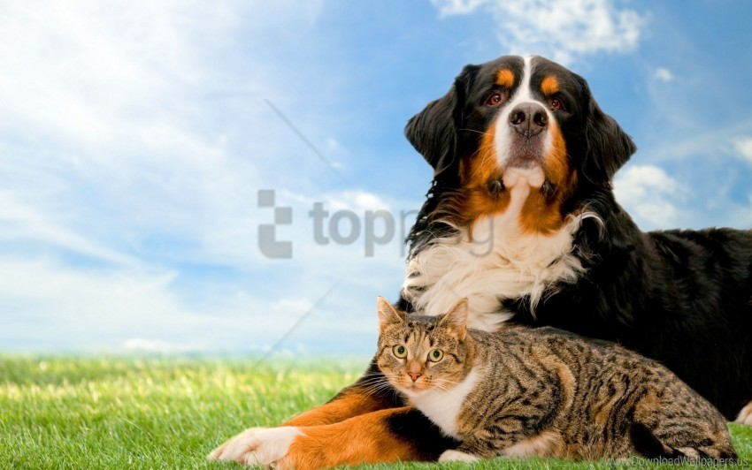 free PNG cat, dog, friends, grass, nature wallpaper background best stock photos PNG images transparent