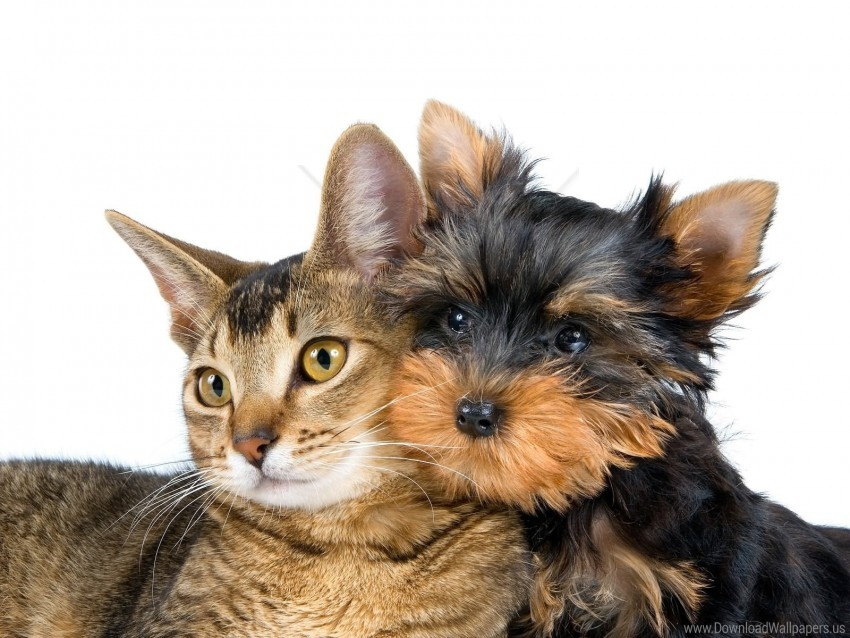 Cat Dog Friends Muzzle Wallpaper Background Best Stock Photos Toppng
