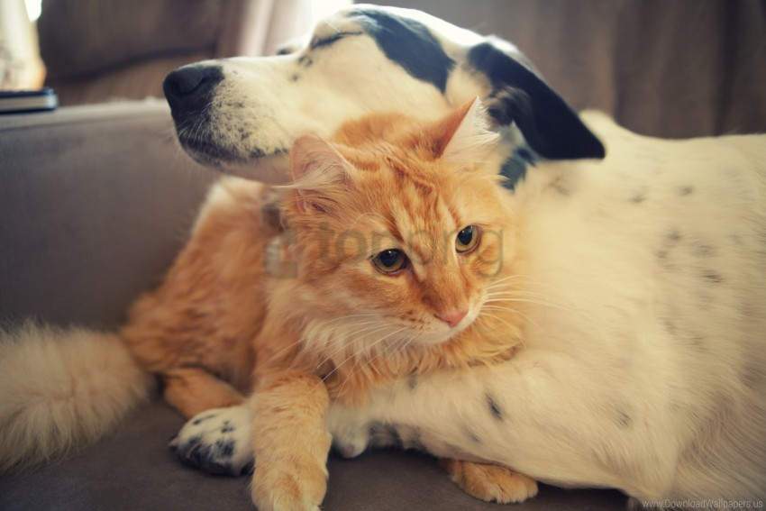 Cat Dog Friends Wallpaper Background Best Stock Photos Toppng