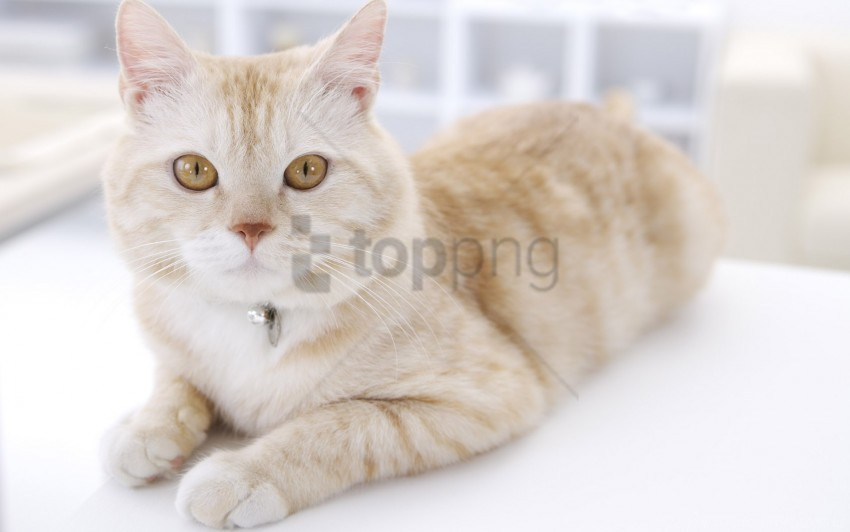free PNG cat, down, light, muzzle, striped wallpaper background best stock photos PNG images transparent