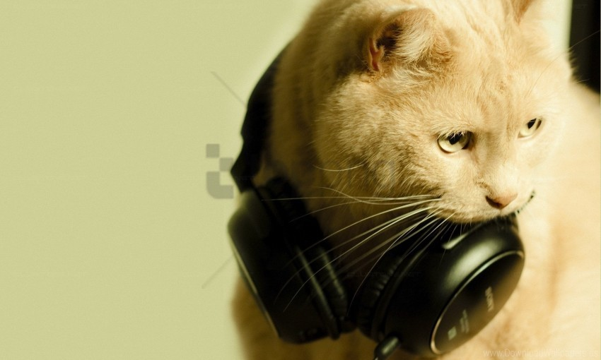 free PNG cat, earphones, face, funky wallpaper background best stock photos PNG images transparent