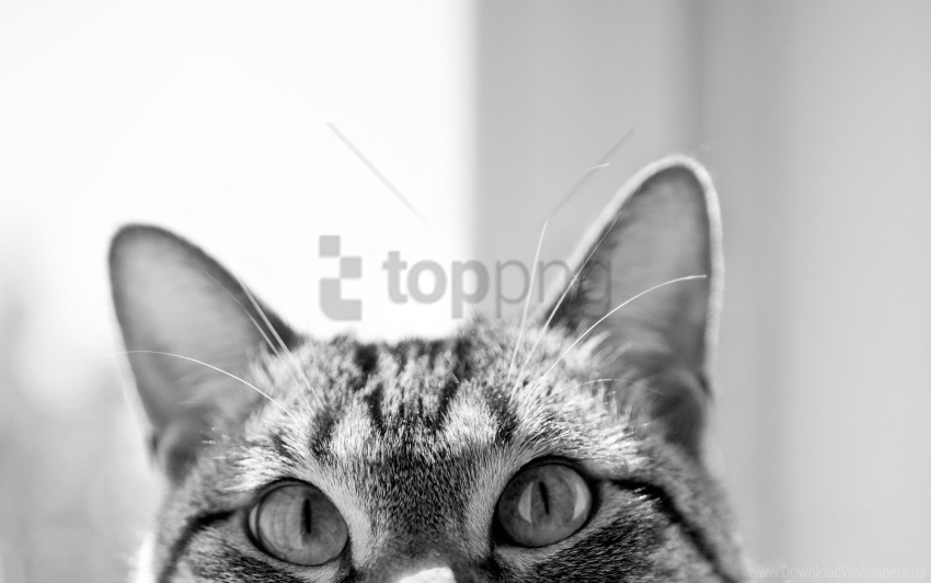 free PNG cat, ears, eyes, hide, muzzle wallpaper background best stock photos PNG images transparent