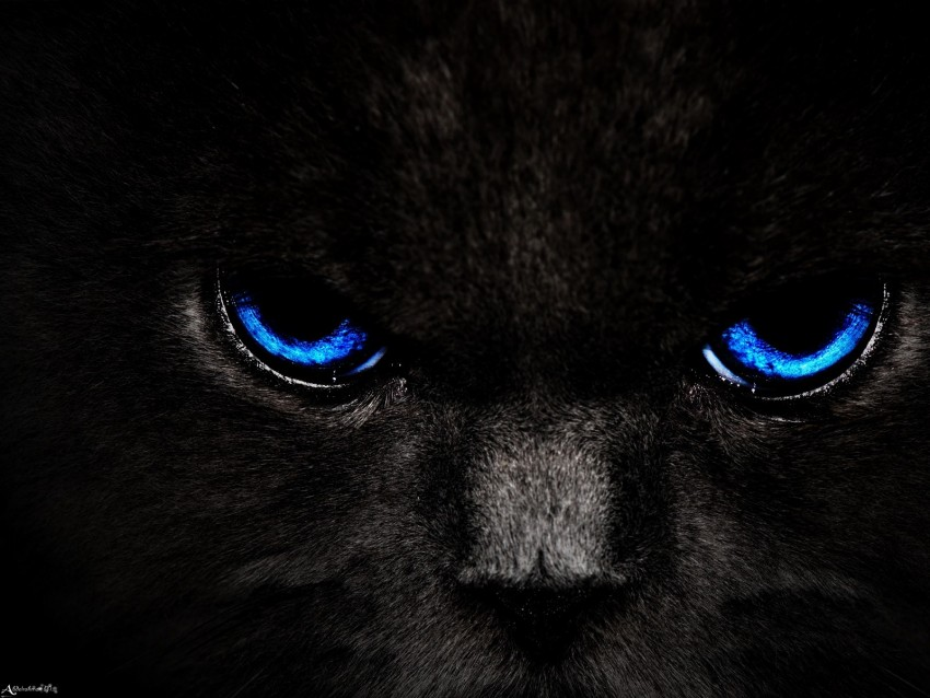 cat, eyes, blue, glance, dark background@toppng.com