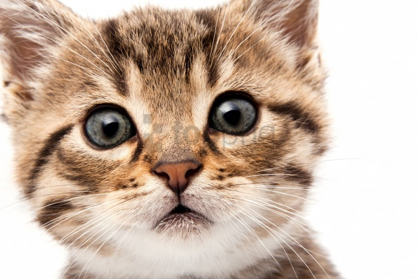 free PNG cat, eyes, eyes, kitten, muzzle, muzzle wallpaper background best stock photos PNG images transparent