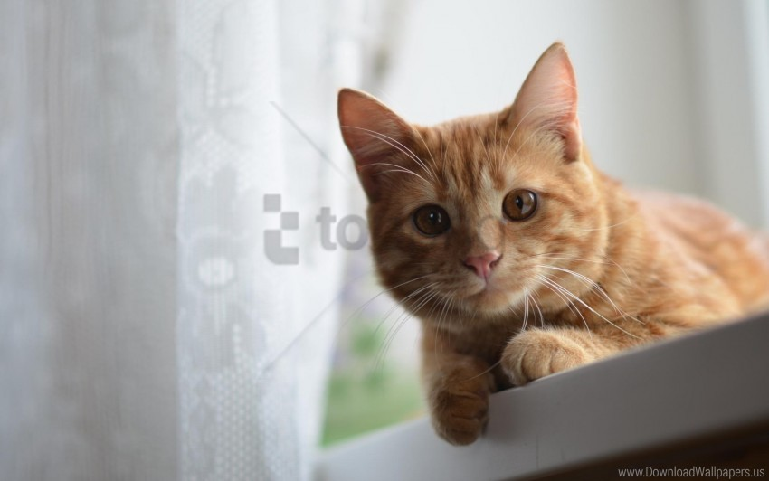 free PNG cat, eyes, face, ginger wallpaper background best stock photos PNG images transparent