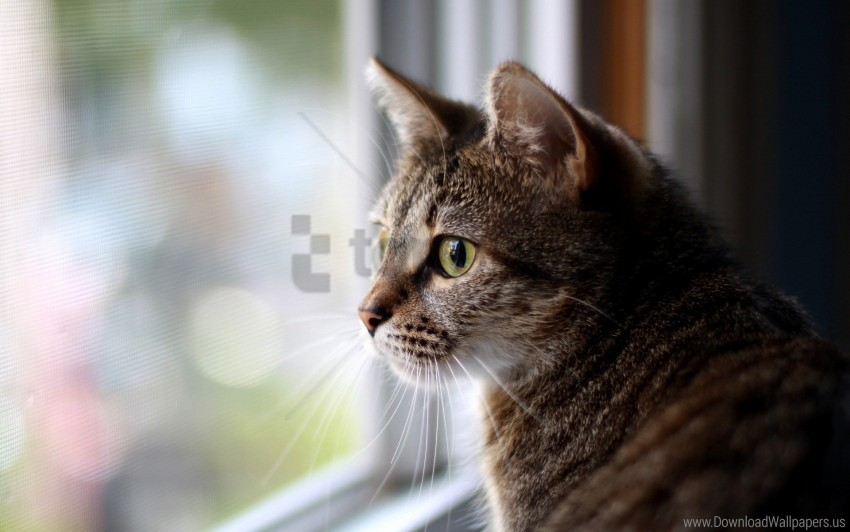 free PNG cat, eyes, face, glass, sadness, waiting, window wallpaper background best stock photos PNG images transparent
