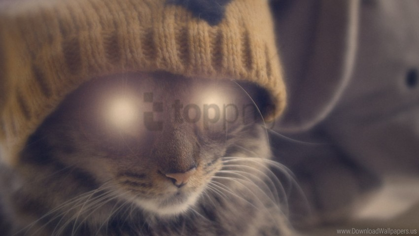 free PNG cat, eyes, face, glow, hat wallpaper background best stock photos PNG images transparent