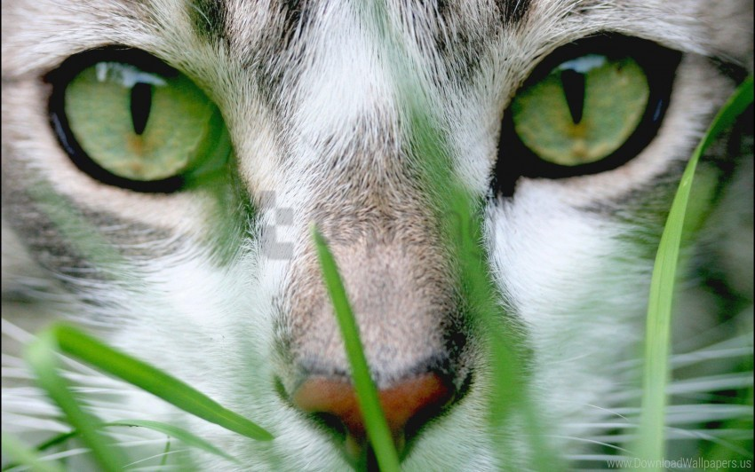 free PNG cat, eyes, face, grass, nose wallpaper background best stock photos PNG images transparent