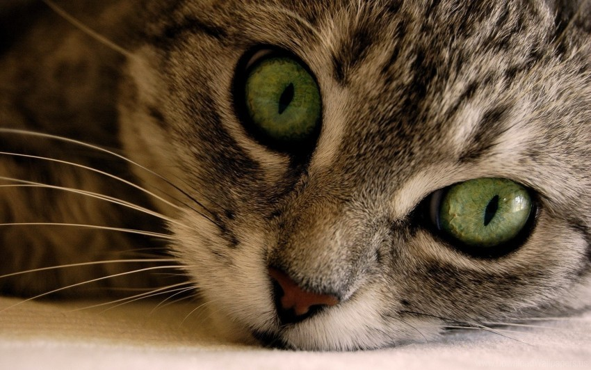free PNG cat, eyes, face, gray, green, striped wallpaper background best stock photos PNG images transparent