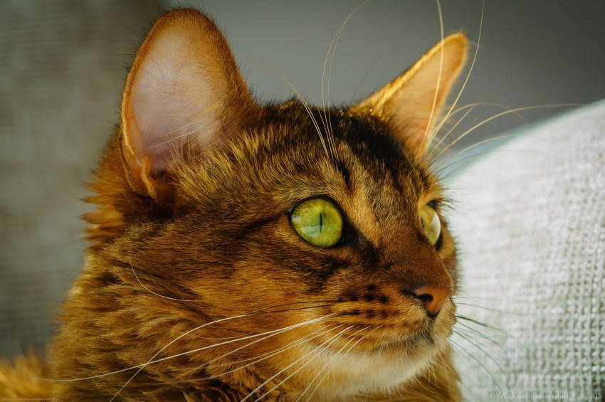 free PNG cat, eyes, face, green eyes wallpaper background best stock photos PNG images transparent