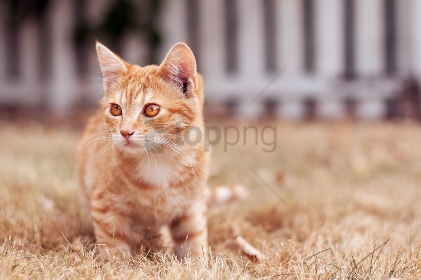 free PNG cat, eyes, face, kitten wallpaper background best stock photos PNG images transparent