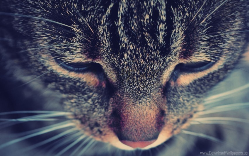 free PNG cat, eyes, face, nose, striped wallpaper background best stock photos PNG images transparent
