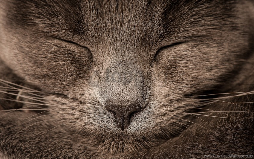 free PNG cat, eyes, gray wallpaper background best stock photos PNG images transparent