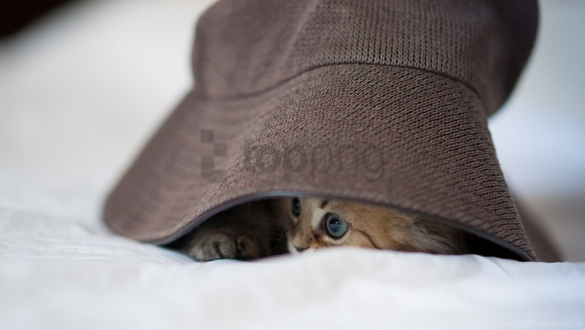 free PNG cat, eyes, hat, playful wallpaper background best stock photos PNG images transparent