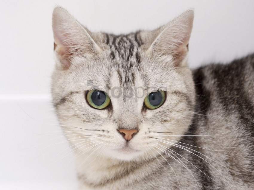 free PNG cat, eyes, kitten, muzzle wallpaper background best stock photos PNG images transparent