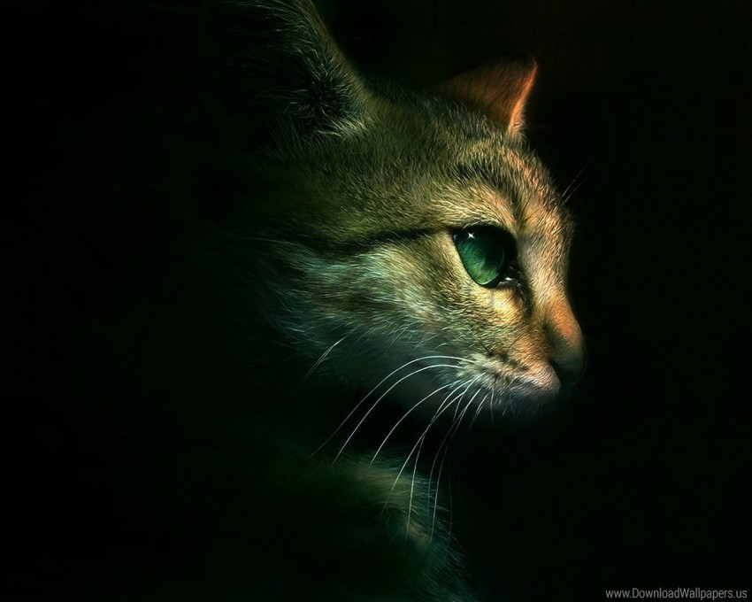 free PNG cat, eyes, muzzle, shadow wallpaper background best stock photos PNG images transparent