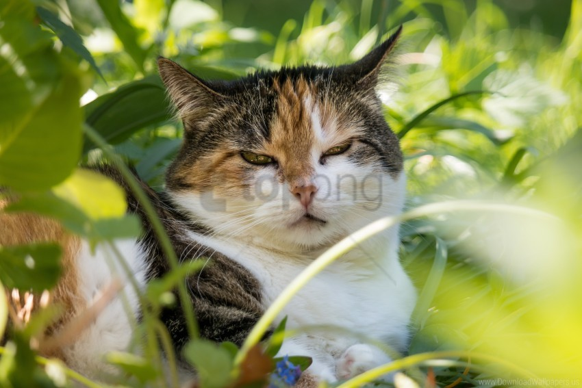 free PNG cat, face, grass, sleepy cat wallpaper background best stock photos PNG images transparent