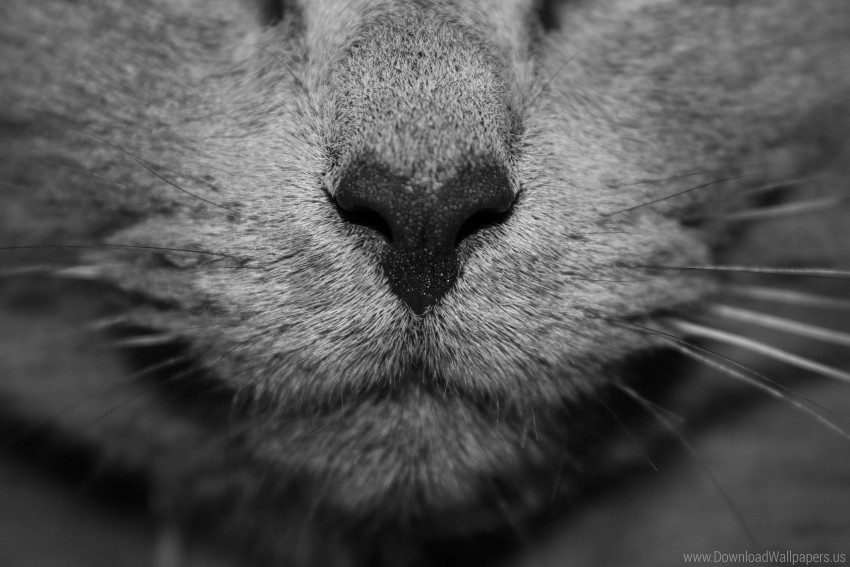 free PNG cat, face, gray, nose wallpaper background best stock photos PNG images transparent
