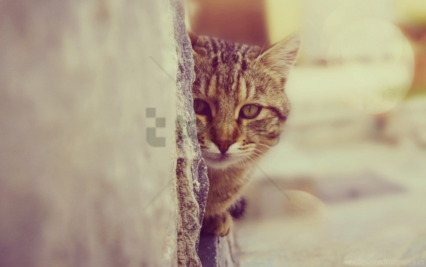 free PNG cat, face, look out wallpaper background best stock photos PNG images transparent