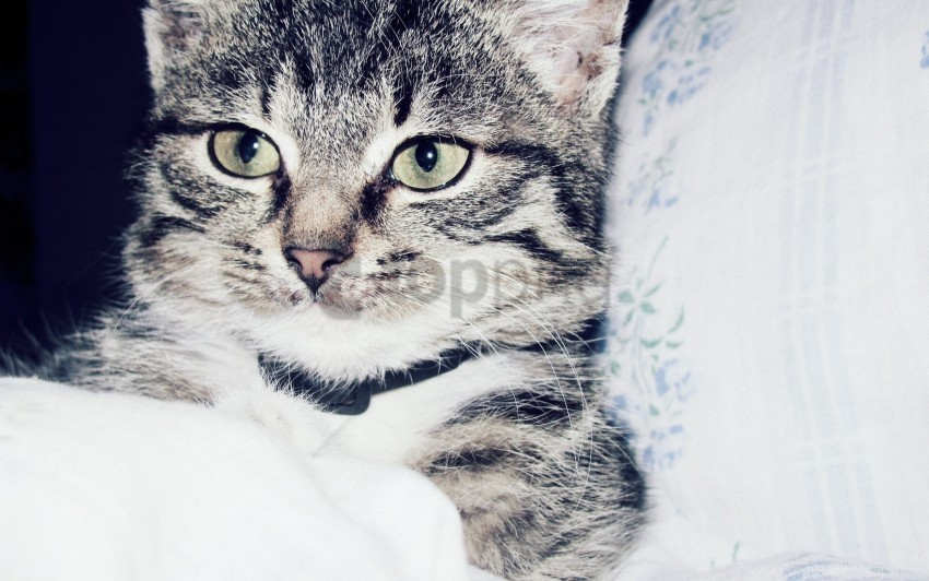 free PNG cat, face, striped wallpaper background best stock photos PNG images transparent