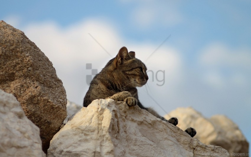 free PNG cat, fatigue, lying, rocks wallpaper background best stock photos PNG images transparent