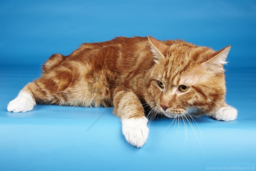 free PNG cat, fear, lying wallpaper background best stock photos PNG images transparent