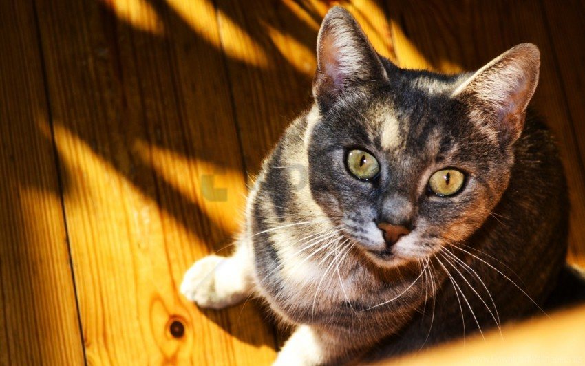 free PNG cat, floor, shadows, sitting, striped wallpaper background best stock photos PNG images transparent
