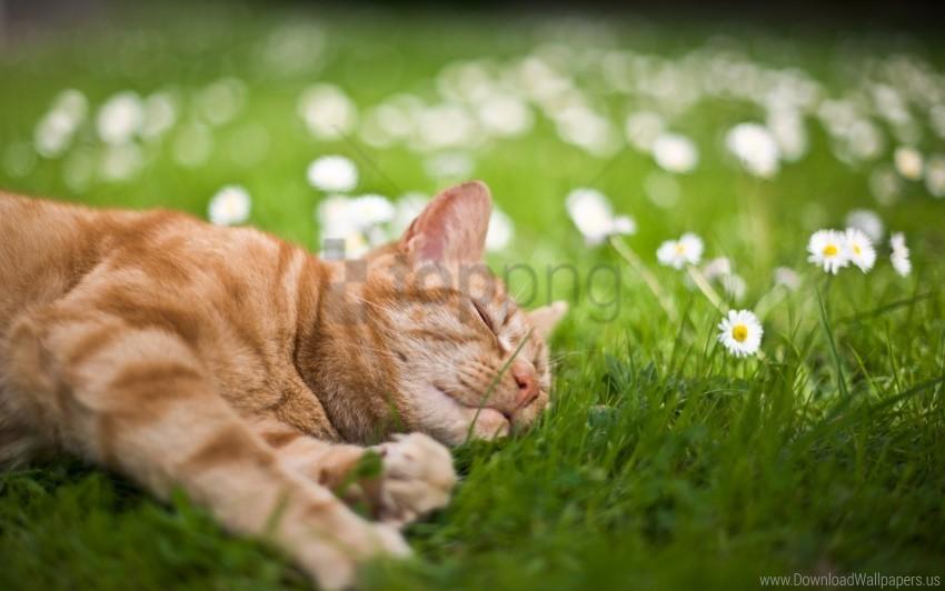 free PNG cat, flowers, grass, lie, sleep wallpaper background best stock photos PNG images transparent