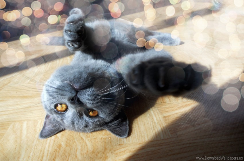 free PNG cat, foot, glare, light, muzzle, playful wallpaper background best stock photos PNG images transparent